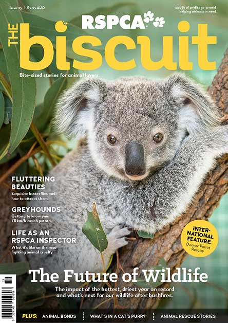 The Biscuit Magazine Subscription